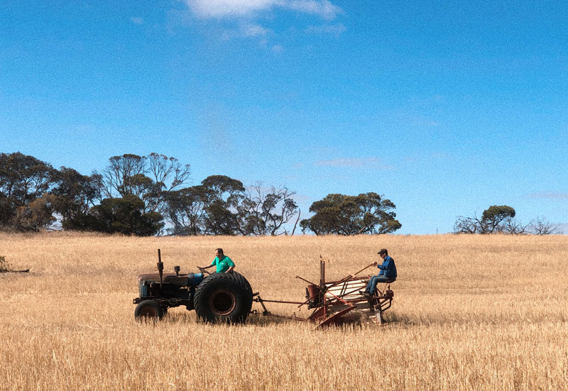 Mister RYE organic rye straws farming partner